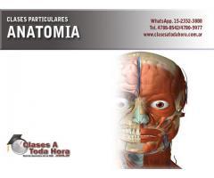 Clases particulares de Anatomia para medicina y conexas – Profesora UBA