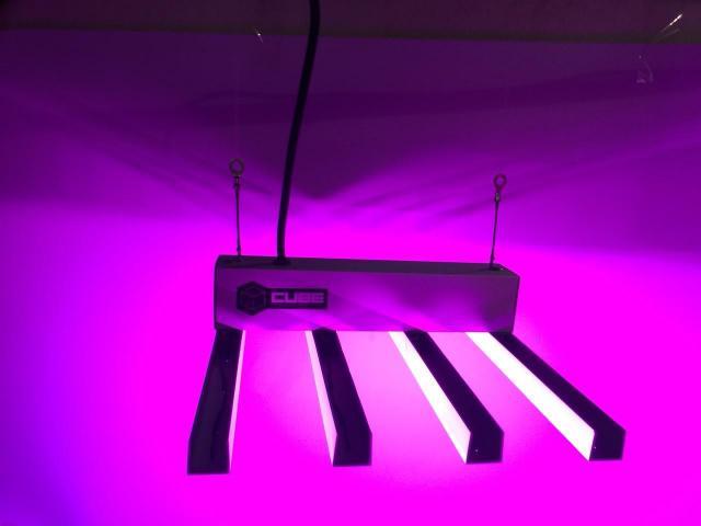 cube panel indoor grow cultivo 300 led 5L3jAR4