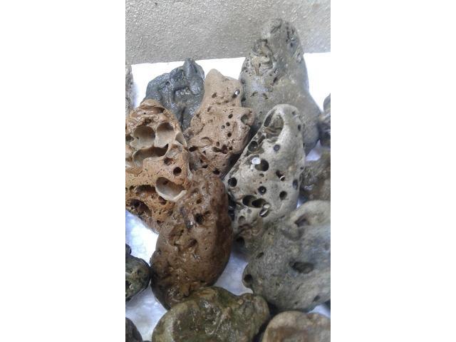 Venta de Caracoles y Piedras Marinas - 2/4