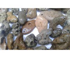 Venta de Caracoles y Piedras Marinas - Imagen 3/4