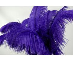 Plumas decorativas naturales de avestruz - Imagen 2/2