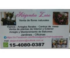 CENTROS DE MESA ARREGLOS FLORALES RAMOS TODO EN FLORES NATURALES