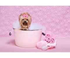 Busco socia para peluqueria canina y pet shop