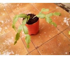 Venta de plantas de interior y/ o exterior