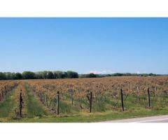 Bodega de vinos con viñedos + 5 casas Lujan mendoza