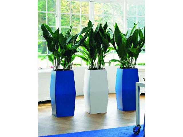 Envio de plantas a domicilio. Plantas de diseño interior y exterior. Jardineria - 2/4