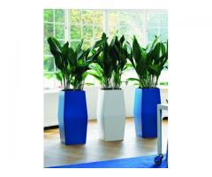 Envio de plantas a domicilio. Plantas de diseño interior y exterior. Jardineria - Imagen 2/4