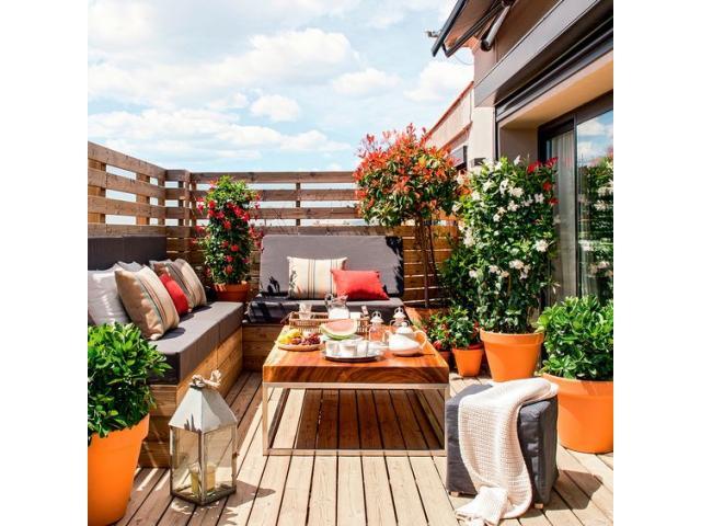Envio de plantas a domicilio. Plantas de diseño interior y exterior. Jardineria - 3/4