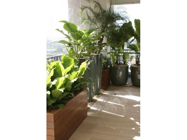 Envio de plantas a domicilio. Plantas de diseño interior y exterior. Jardineria - 4/4