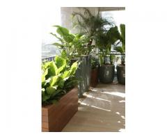 Envio de plantas a domicilio. Plantas de diseño interior y exterior. Jardineria - Imagen 4/4