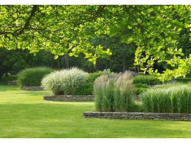 VIvero online. Plantas de diseño interior y exterior. Envios. Asesoramiento - 2/3