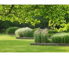 VIvero online. Plantas de diseño interior y exterior. Envios. Asesoramiento