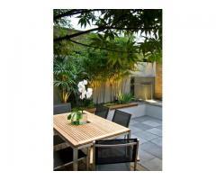 VIvero online. Plantas de diseño interior y exterior. Envios. Asesoramiento - Imagen 3/3