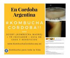 Kombucha en Argentina  - Scoby